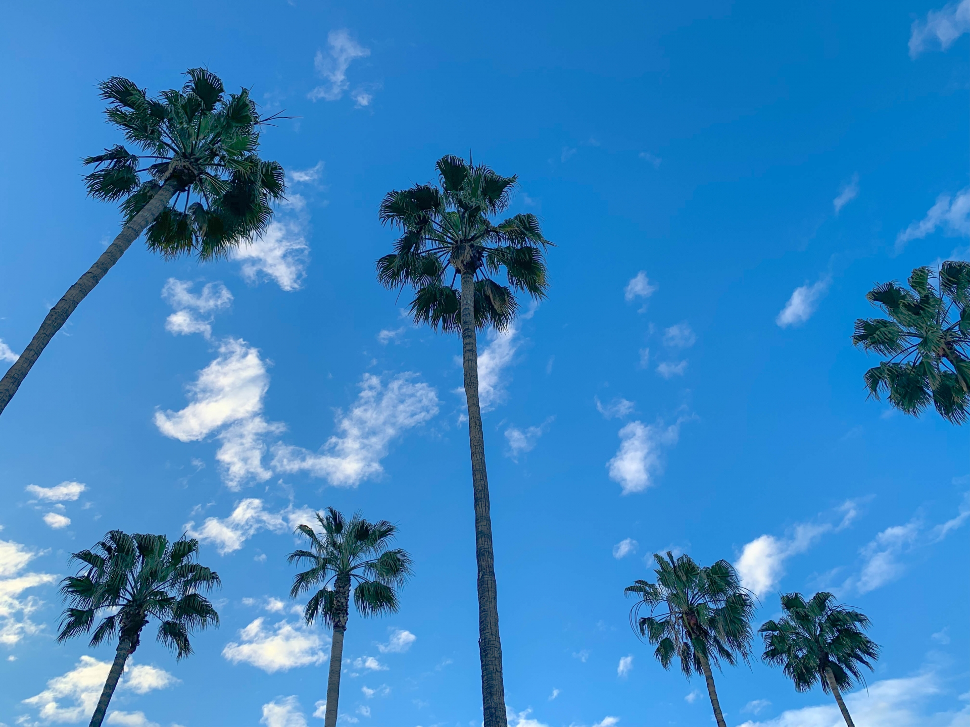 在洛杉磯自言自語〜L.A.独白 第2回<br>――小学生から名著に触れさせる学校教育の違い
